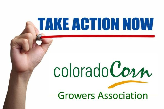 CCGA Take Action Now banner ad 3